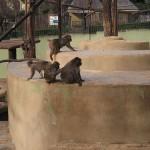 Bioparco di Roma (zoo): apor